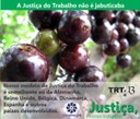 novo_justiça-nosso-trabalho8.jpg